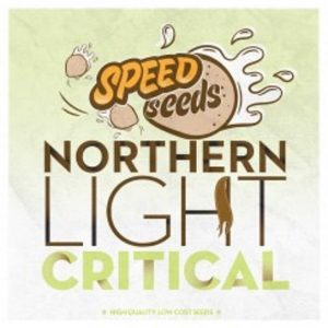 NORTHEN LIGHT X CRITICAL