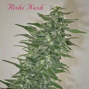 RISHI KUSH