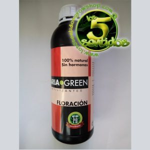 FLORACION MARIA GREEN