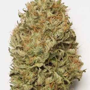 BLUE DREAM AUTO- LOS 5 SENTIDOS GROW SHOP