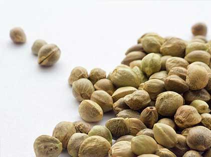 venta-de-semillas-cannabis