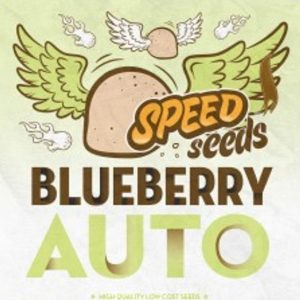 blueberry-auto-a-granel-speed-seeds