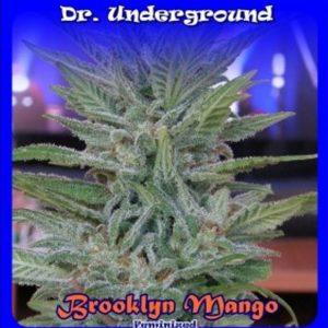 brooklyn-mango-feminizadas-dr-underground
