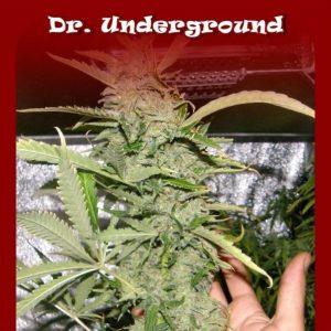 crystal-meht-feminizada-dr-underground