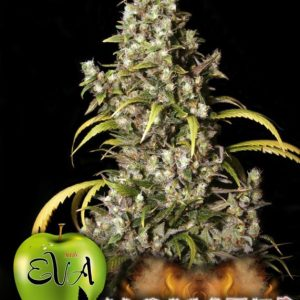 monster-feminizada-eva-seeds