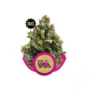 candy-kush-express-fast-version