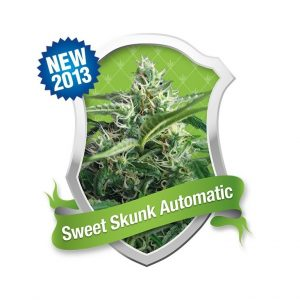 sweet-skunk-automatic-feminizada-royal-queen-seeds