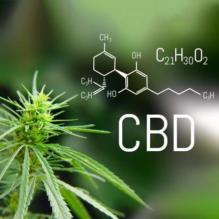 cbd cannabidiol-los 5 sentidos grow shop benidorm